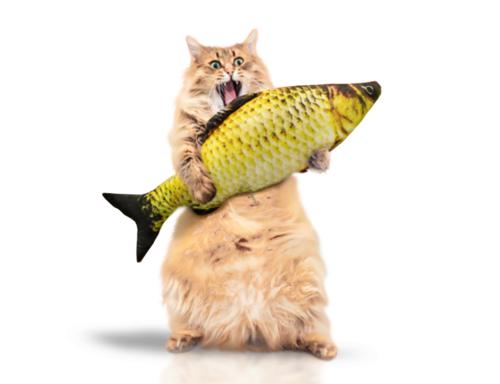 Jérémie 'Fish' VALENSI